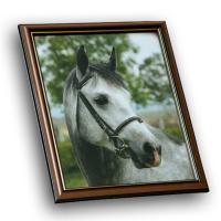 Снимка на кон в рамка